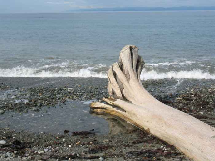 Driftwood on the beach at Dungeness Spit