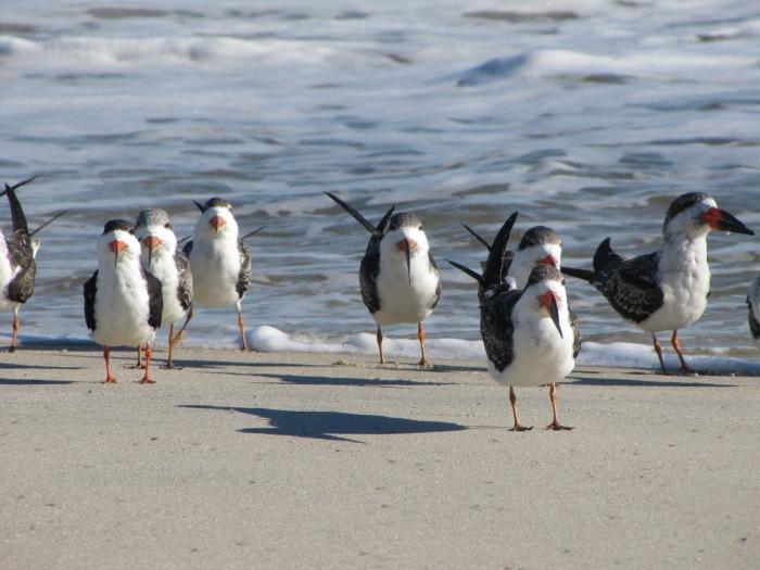 Walkin'  on the beach