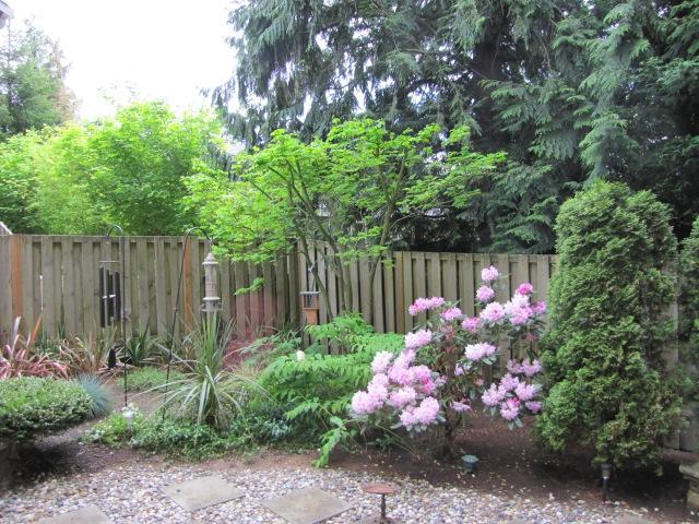 Backyard May, 2013
