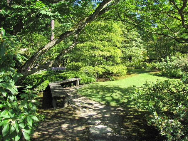 Leafy glade with bench, Seattle Japanese Garden