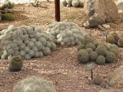 A bunch of different kinds of barrel cactus.