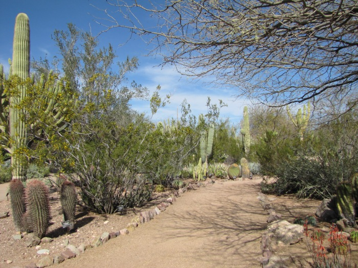 Cactus-lined path, Desert Botanical Garden