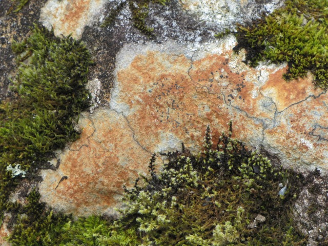Colorful Lichen on Granite