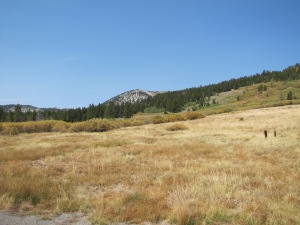 Mt. Rose meadow