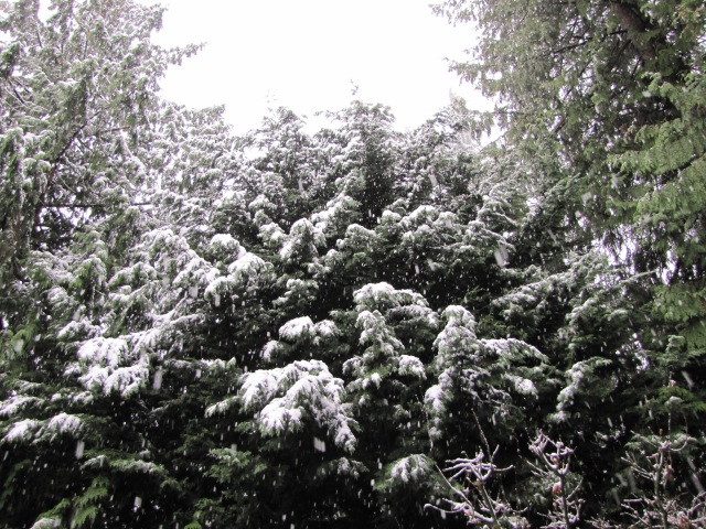 back yard trees in snow
