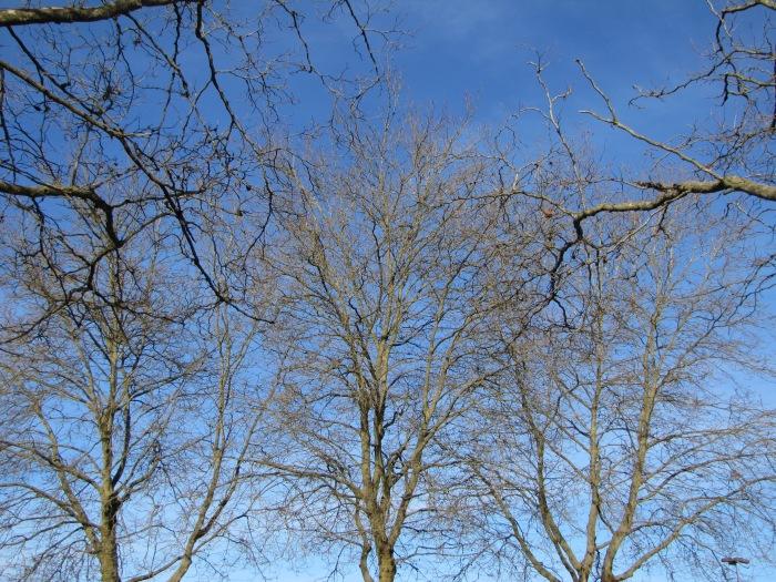 Winter tree 1