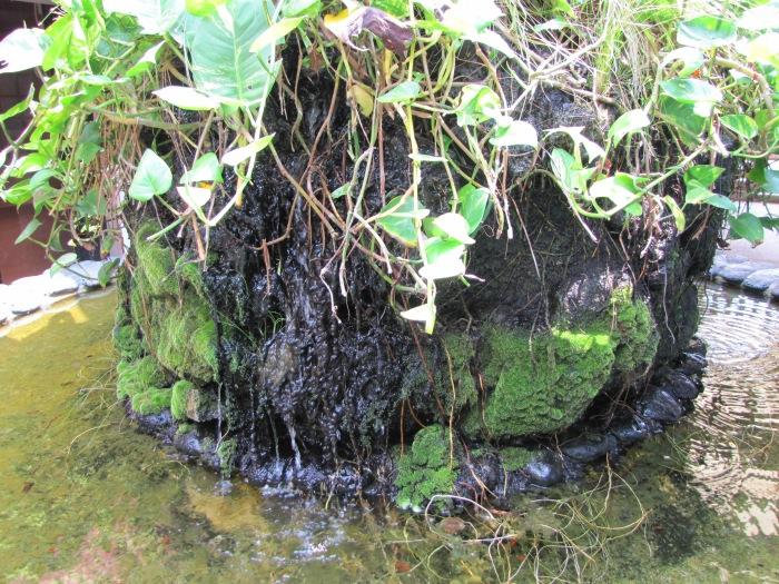 FountainPlants