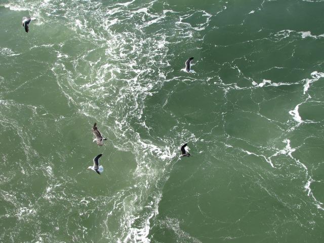 Gulls-green water