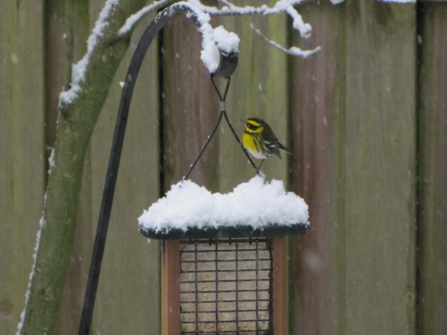 WinterWarbler