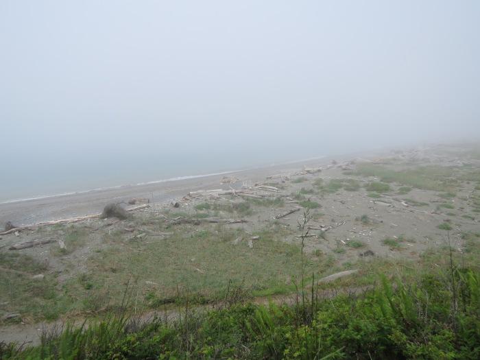 FoggySpit