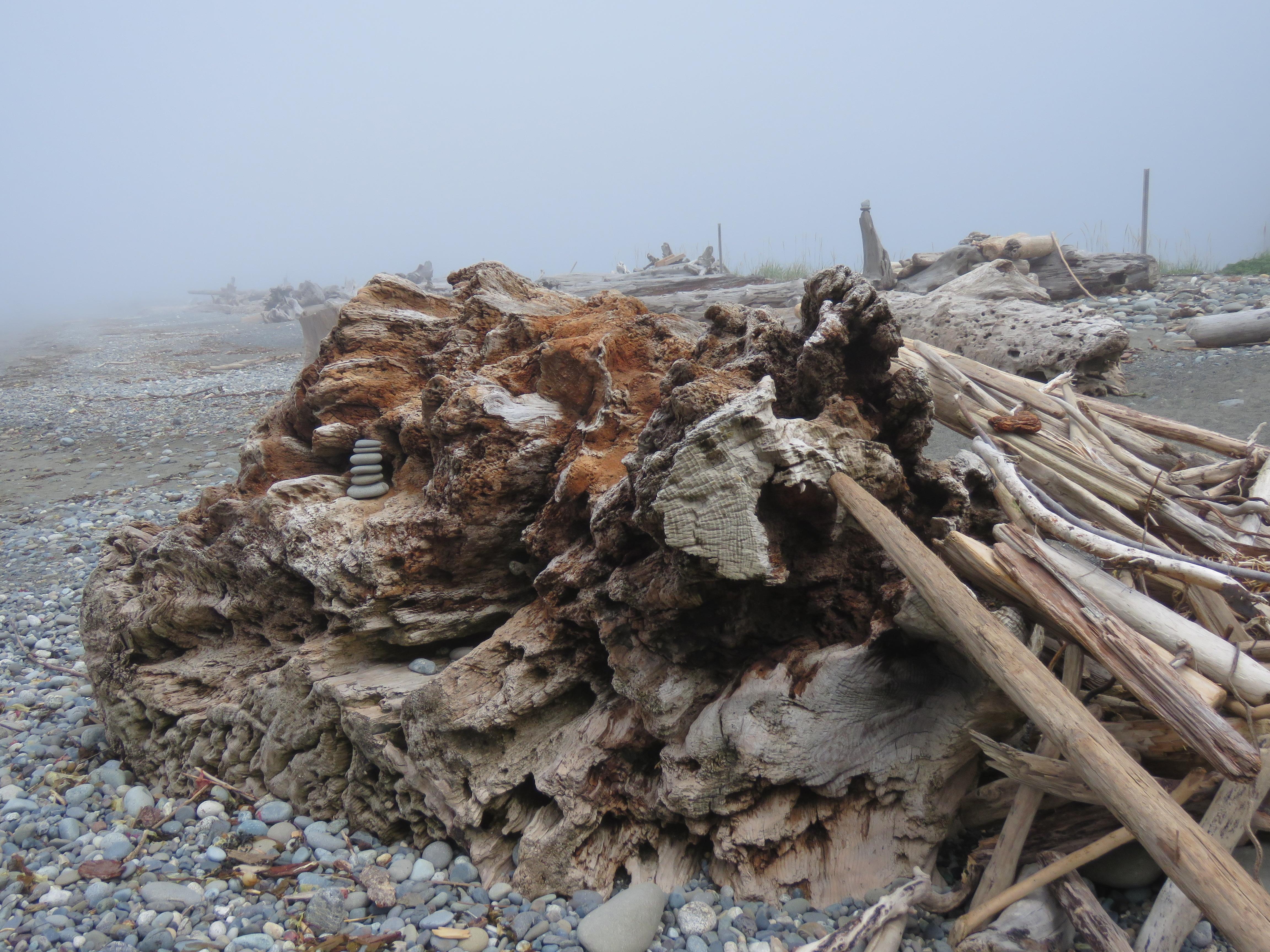 Huge driftwood log