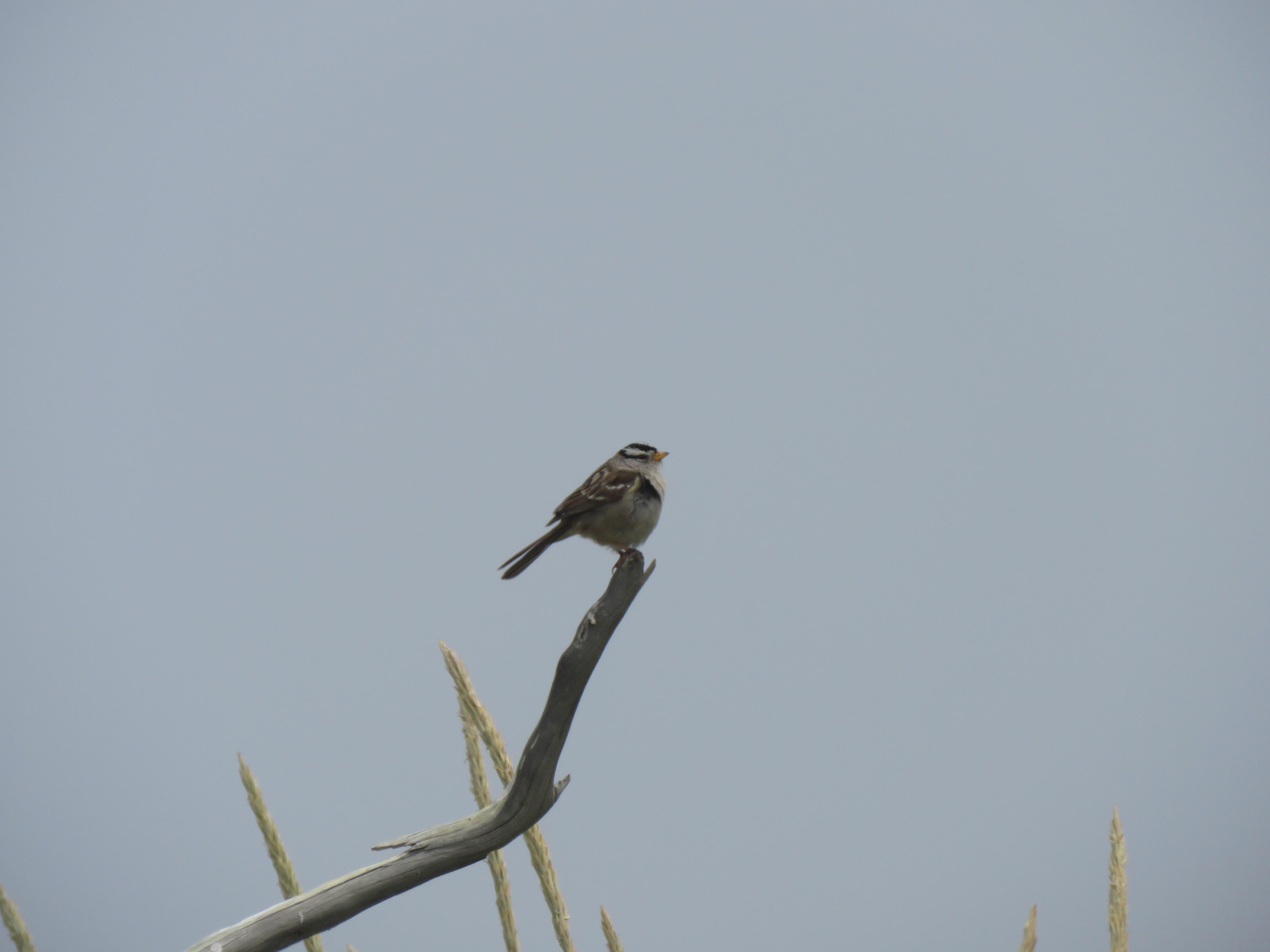 portrait of sparrow