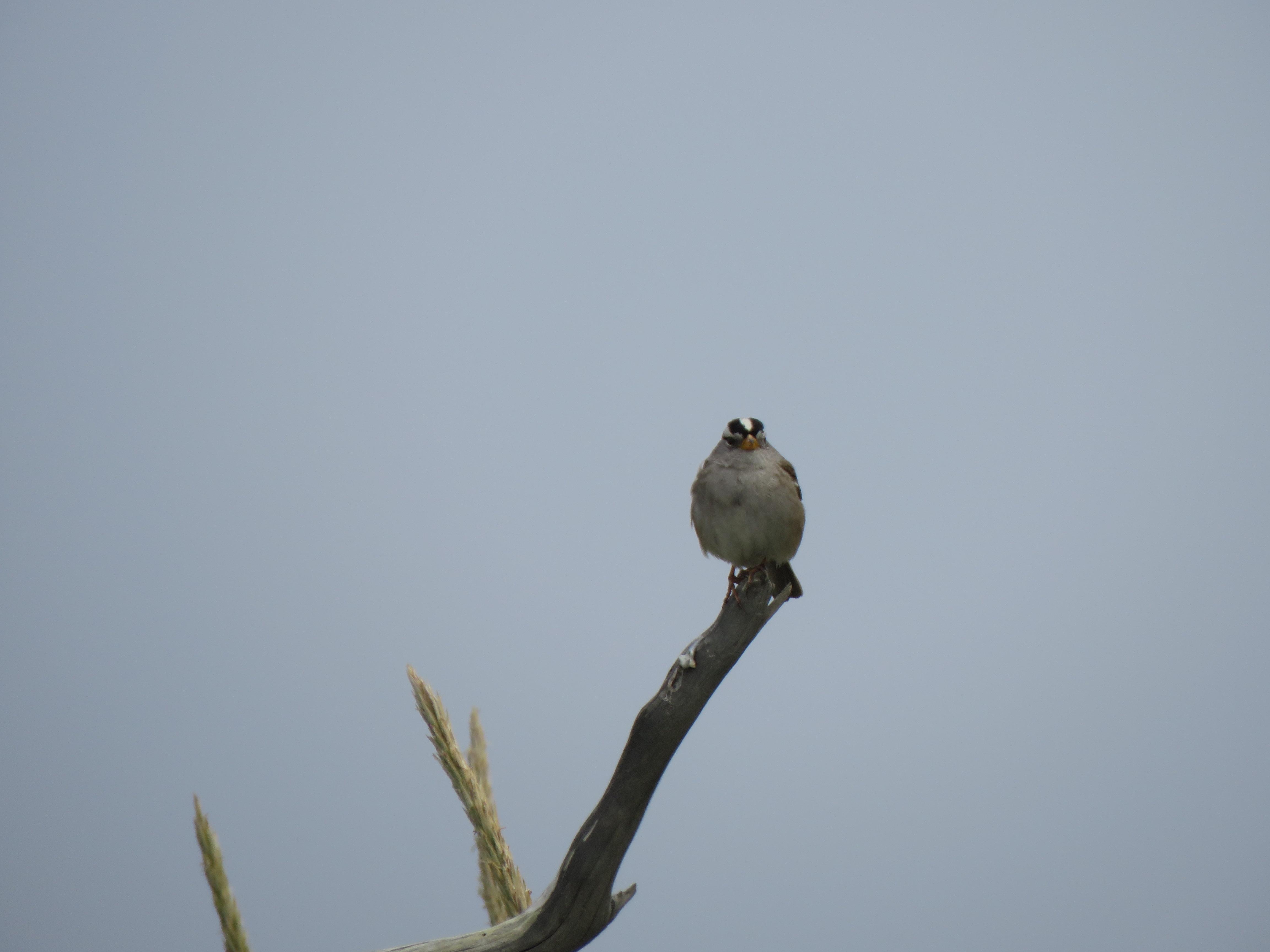 sparrow facing
