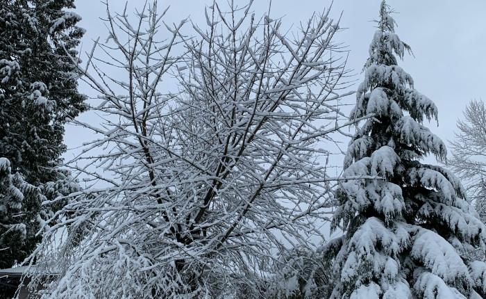 Winter Wonderland. It's Snow-homish County! Updated Tuesday 1-14