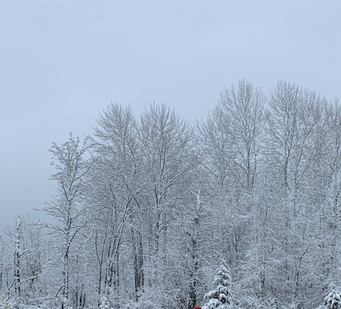 SnowTrees1-13-20