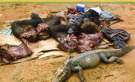 bushmeat-Africa