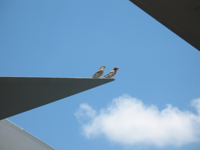 2862Finches-SDAir-SpaceMuseum