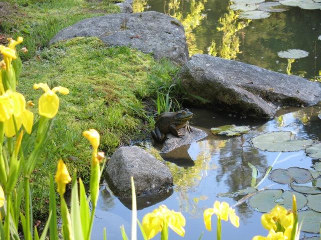 GardenBullfrog