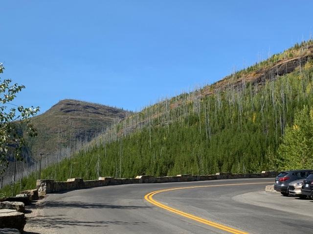 RoadCurve-FireDamagedTrees