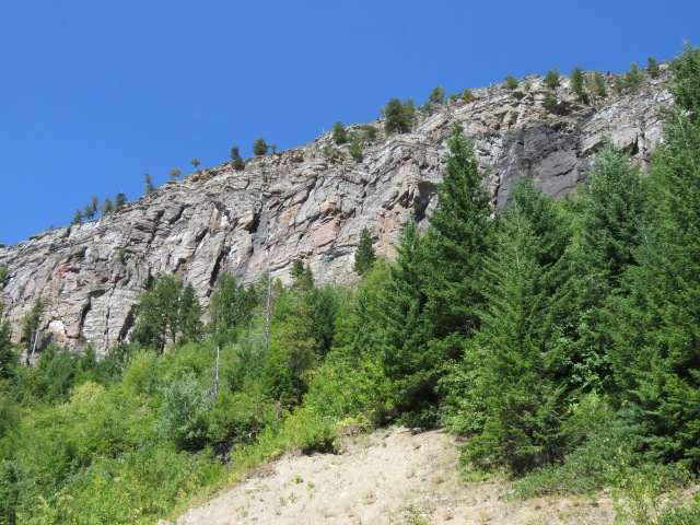 Trees-rockWall