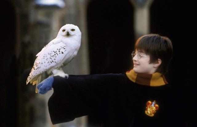 Harry-Hedwig