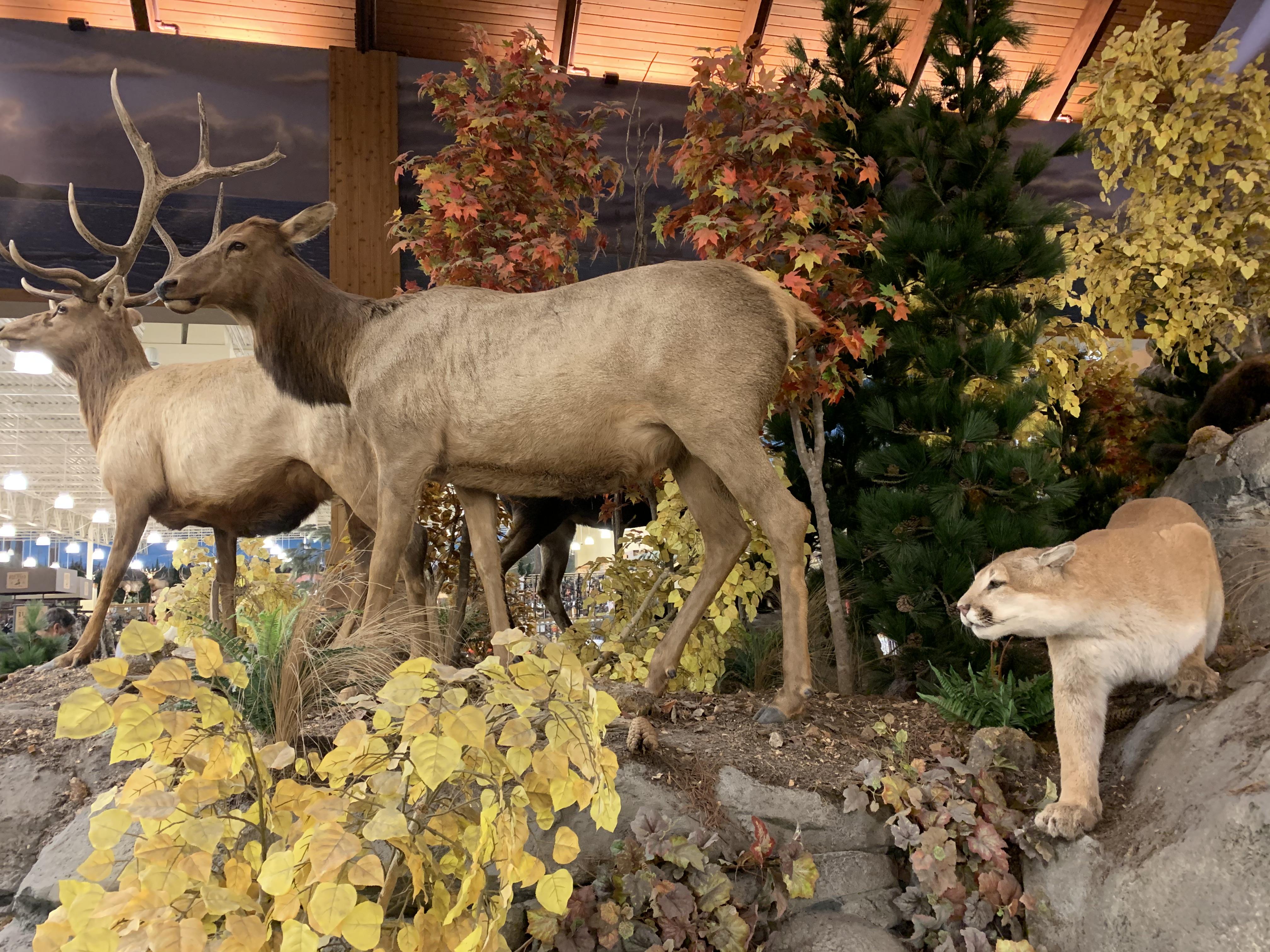 Deer,MtnLion