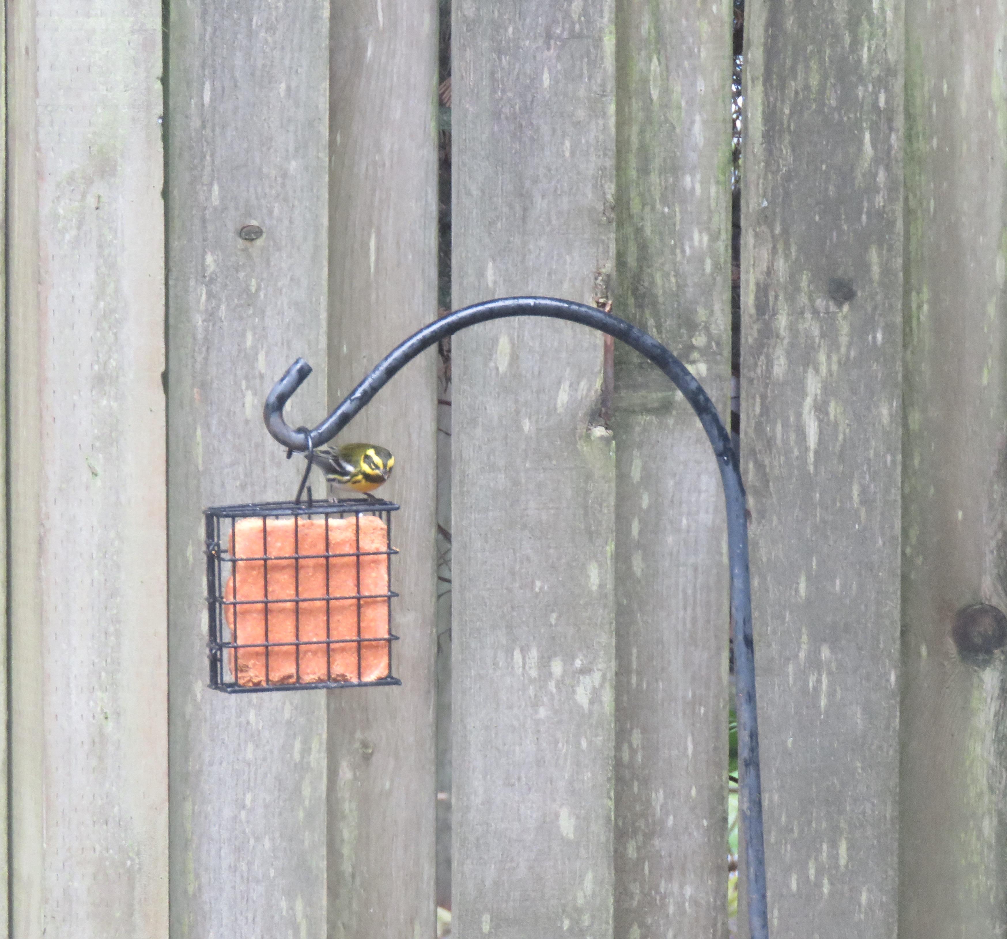 Warbler-check1