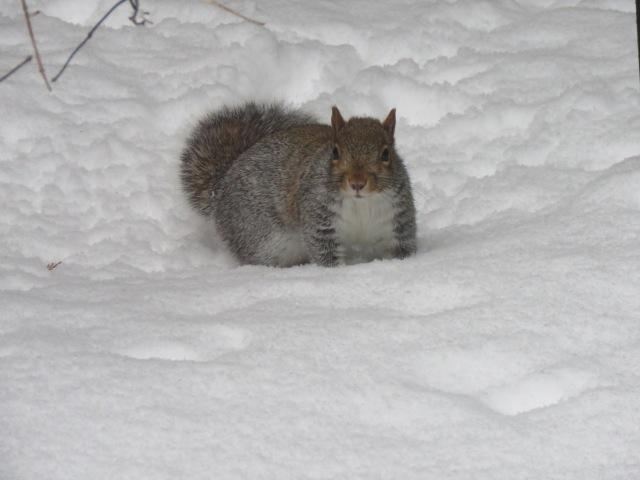 SquirrelSnow1