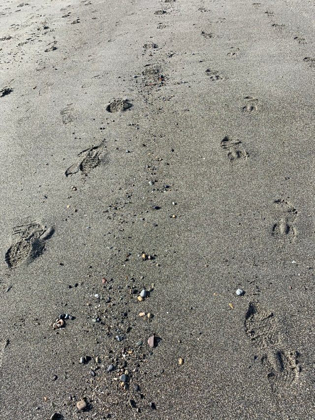 1956-footprints coming and going