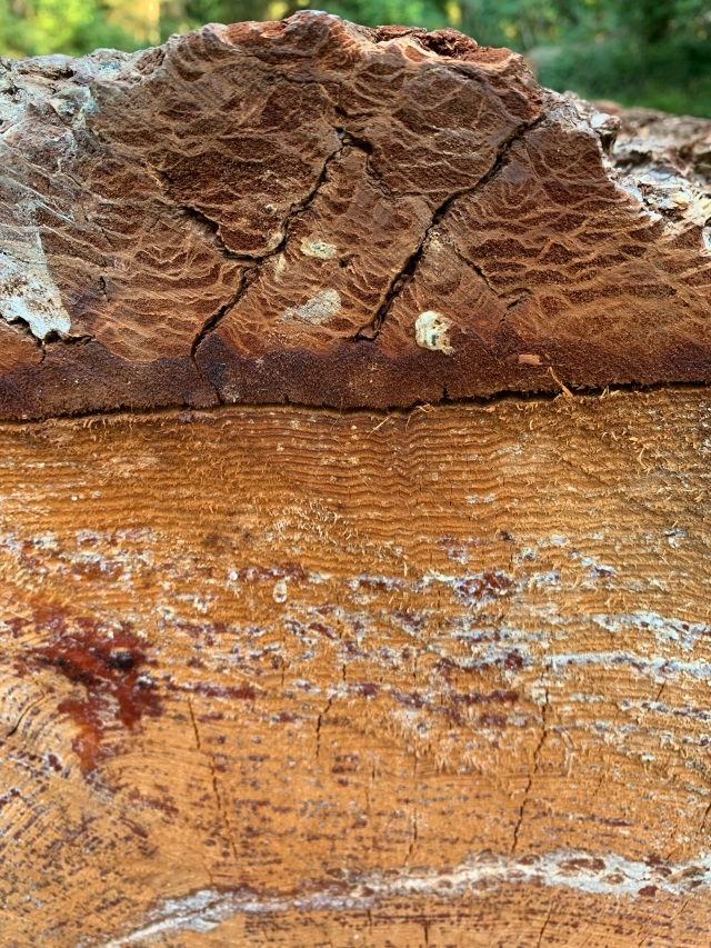 Closeup-bark