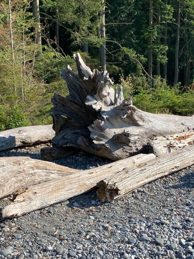 DriftwoodLog
