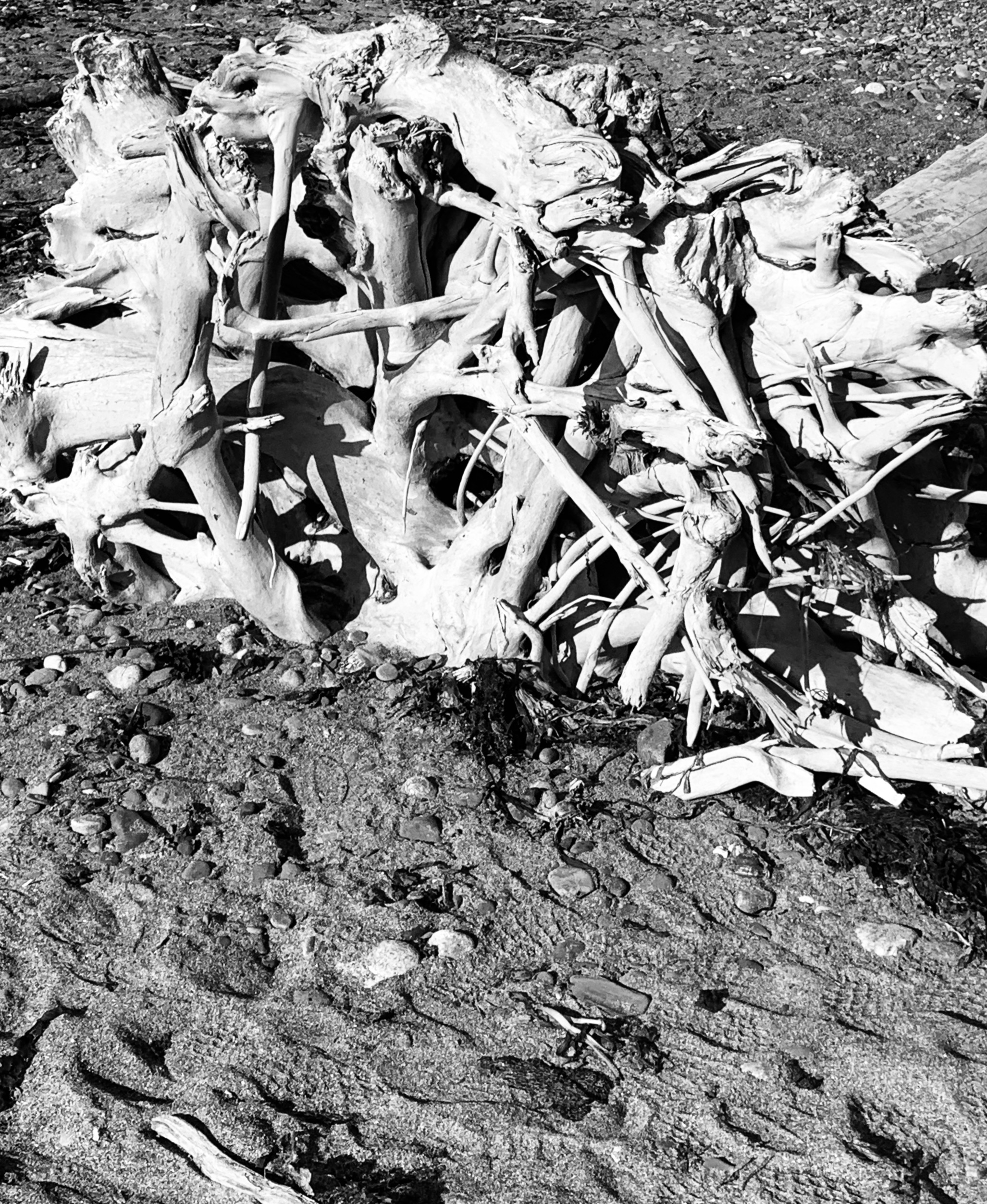 DriftwoodB-WNoir