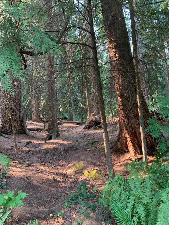 ForestGlade